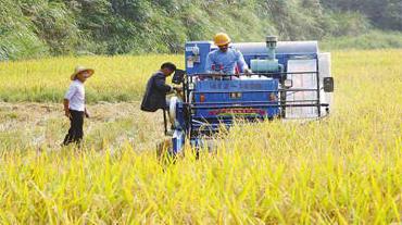 大安积极发展避灾农业促农增收